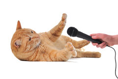 Playful Cat with Microphone Royalty Free Stock Images