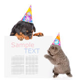 Playful cat and rottweiler puppy in birthday hats peeking from b Royalty Free Stock Image