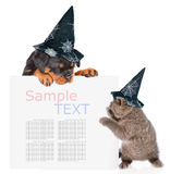 Playful cat and rottweiler puppywith hats for halloween peeking from behind empty board. isolated on white background Royalty Free Stock Photos