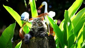 Playful cat sitting on a tree stump Royalty Free Stock Image