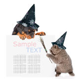 Playful cat with witches broom stick and rottweiler puppy with hats for halloween peeking from behind empty board. isolated Stock Image