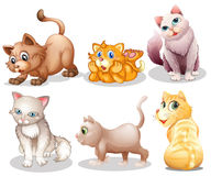 Playful cats. Illustration of the playful cats on a white background Stock Photo