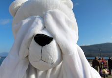 Playful character dressed as polar bear Royalty Free Stock Photos