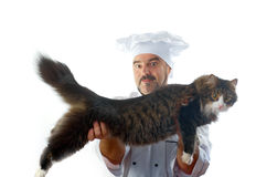 Playful Chef and Chef Cat Royalty Free Stock Image