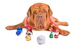 Playful Christmas Royalty Free Stock Photo