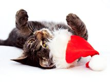 Playful Christmas Cat Royalty Free Stock Photos