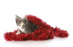 Playful christmas kitten Royalty Free Stock Photo
