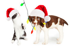 Playful Christmas Kitten and Puppy Royalty Free Stock Photos