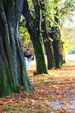 Playful couple peering around an autumn tree Royalty Free Stock Photo