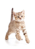 Playful cute young cat kitten Stock Photo