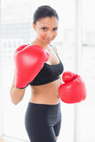 Playful dark haired model in sportswear wearing red boxing gloves Stock Photos