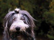 Playful dog Royalty Free Stock Photography