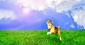 Playful dog jumping. Playful cute dog jumping on a lawn Stock Photo