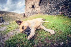 Playful dog lying around on the grass stock photography