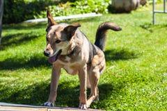 Playful dog Stock Photography
