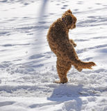 Playful dog in the snow Royalty Free Stock Image