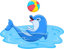 Playful Dolphin Stock Photo