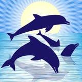 Playful dolphins Stock Photos