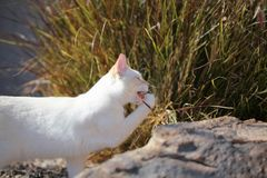 Playful flame point kitten in the garden! royalty free stock images