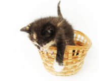 Playful funny kitten in the wicker basket Stock Photography