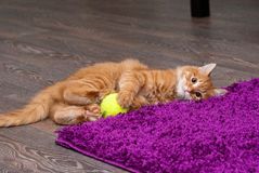 Playful ginger kitten. Nice and fluffy little ginger kitten playing with a ball Stock Photos