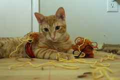 Playful happy kitten in a bunch of yarn royalty free stock photo