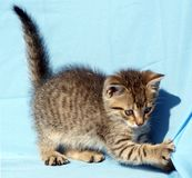 playful kitten Stock Photo
