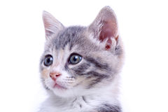 Playful kitten. stock image