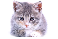 Playful kitten. royalty free stock photos