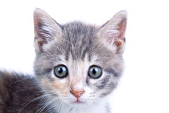 Playful kitten. stock photography