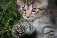A  playful  kitten Royalty Free Stock Photos