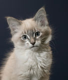 Playful kitten Stock Photos