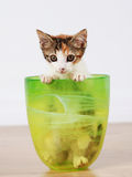 Playful kitten. Cute, playful young kitten peeking out of a green bowl stock photos