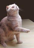 Playful kitten Stock Photo