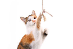 Playful kitten Stock Image