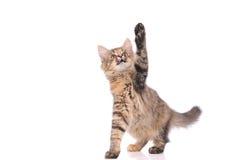 Playful kitten cat Stock Photo