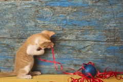 Playful kitten Christmas background Stock Photo