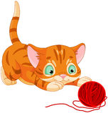 Playful Kitten Stock Photography