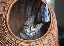 Kitten playing with his toy Royalty Free Stock Photos