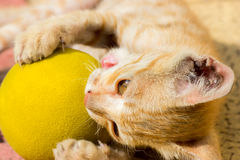 Playful kitten playing with ball Stock Photo