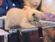 Playful kitten royalty free stock image