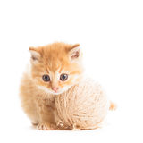Playful kitten Royalty Free Stock Image