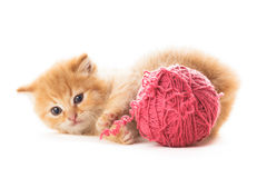 Playful kitten Royalty Free Stock Photo