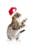Playful kitten in red santa hat looking up. isolated on white Royalty Free Stock Photos