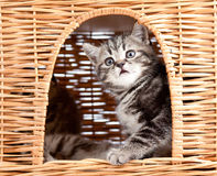 Playful kitten sitting inside cat house Stock Photos