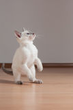 Playful kitten. Stock Photo
