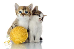 Playful kittens. On white background Stock Photo