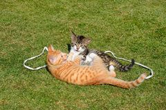 Playful kittens in the garden. Royalty Free Stock Images