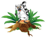 A playful lemur above the wood Royalty Free Stock Images