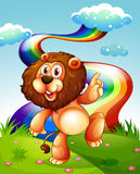 A playful lion at the hilltop and the rainbow in the sky Royalty Free Stock Photography